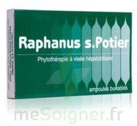 RAPHANUS S.POTIER BIOLOGIQUE, bt 12 à Nice